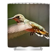 Hummingbird Facing Left Shower Curtain