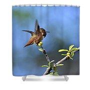 Hummingbird Feeling Frisky 1 Shower Curtain