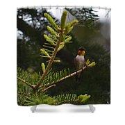 Hummingbird Flashing Shower Curtain