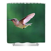 Hummingbird Flickering Its Tongue Shower Curtain