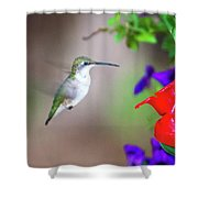 Hummingbird Found In Wild Nature On Sunny Day Shower Curtain