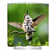Hummingbird Happy Dance Shower Curtain