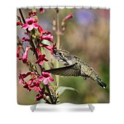 Hummingbird Haven  Shower Curtain