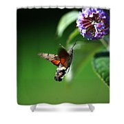 Hummingbird Hawk Moth - Five Shower Curtain