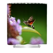 Hummingbird Hawk Moth - Four Shower Curtain