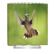 Hummingbird Hello There Shower Curtain