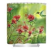 Hummingbird In Beebalm Shower Curtain