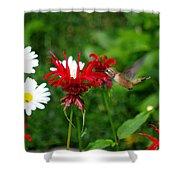 Hummingbird In Flowers Shower Curtain