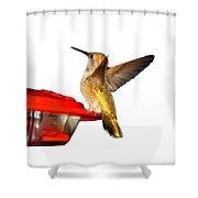 Hummingbird In My Window Shower Curtain
