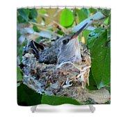 Hummingbird In Nest 1 Shower Curtain