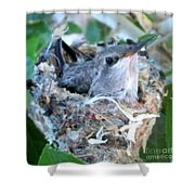 Hummingbird In Nest 2 Shower Curtain