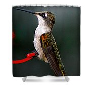 Hummingbird In Profile Shower Curtain