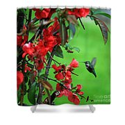 Hummingbird In The Flowering Quince - Digital Painting Shower Curtain