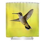 Hummingbird In Yellow Shower Curtain