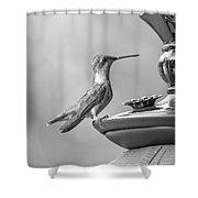 Hummingbird Intrigue  Shower Curtain