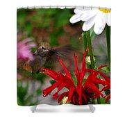 Hummingbird Mid Flight Shower Curtain