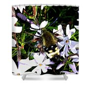 Hummingbird Moth Shower Curtain