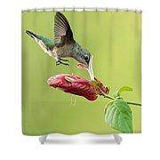 Hummingbird Nose Dive Shower Curtain
