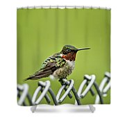 Hummingbird On A Fence Shower Curtain
