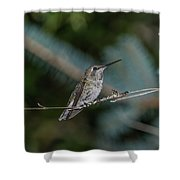 Hummingbird On A Twig Shower Curtain