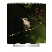 Hummingbird On Blackberry Bush Shower Curtain