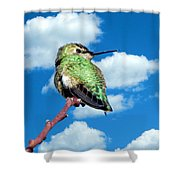 Hummingbird On High Shower Curtain