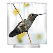 Hummingbird On Tightrope Shower Curtain