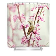 Hummingbird Perched Among Pink Blossoms Shower Curtain