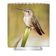 Hummingbird Perched V Shower Curtain