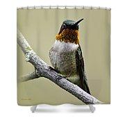 Hummingbird Portrait Square Shower Curtain