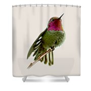 Hummingbird Portrait T1 Shower Curtain