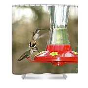 Hummingbird Trio Shower Curtain