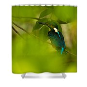 Hummingbird Wants To Hide Shower Curtain