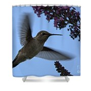 Hummingbird Wings And Butterfly Bush Shower Curtain