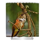 Hummingbird With An Itch Shower Curtain