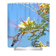 Hummingbird With Honeysuckle Shower Curtain