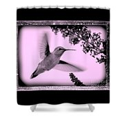 Hummingbird With Old-fashioned Frame 2  Shower Curtain