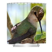 Hummingbird With Small Nest Shower Curtain