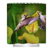 Hummingbirds In Virginia Shower Curtain