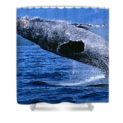 Humpback Full Breach Shower Curtain
