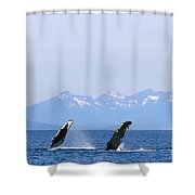 Humpback Pectoral Fins Shower Curtain