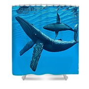 Humpback Whale Bonding Shower Curtain