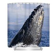 Humpback Whale Breaching Shower Curtain