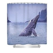 Humpback Whale Breaching Shower Curtain