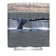 Humpback Whale Fluke Shower Curtain