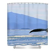 Humpback Whale Flukes Shower Curtain