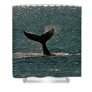 Humpback Whale Lifts Its Fluke. I Shower Curtain