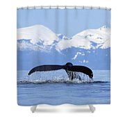 Humpback Whale Megaptera Novaeangliae Shower Curtain