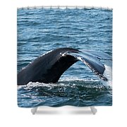 Humpback Whale Of A Tail Shower Curtain