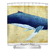 Humpback Whale Painting - Framed Shower Curtain